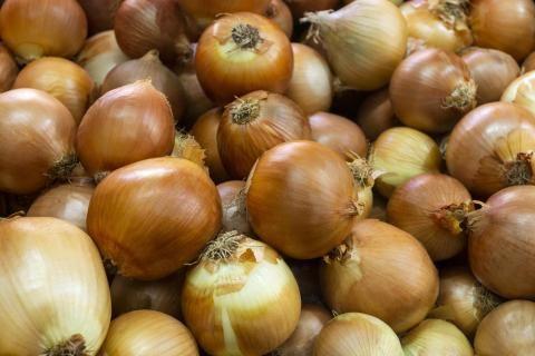 تصدير البصل لروسيا -مجموعة بصل متراصة