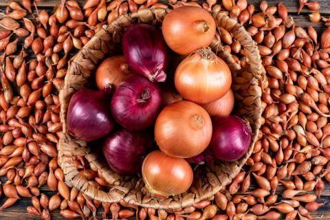 تصدير البصل لروسيا -صندوق يحتوي على البصل الأحمر