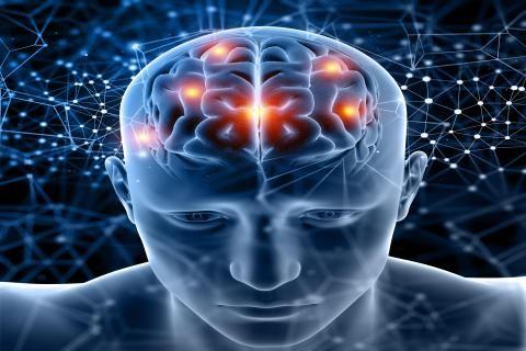 هل تنميل الرأس خطير -صورة دماغ الإنسان كامل