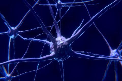 هل تنميل الرأس خطير  -الخلايا العصبية