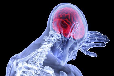 هل نزيف المخ يسبب الوفاة -شكل الجهاز العصبي