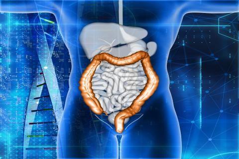 اعراض سرطان القولون -شكل القولون التشريحي